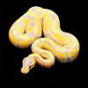 Ectotherm w/ Mama Snake & Ida Engelhardt